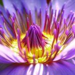 flower-2919284_1280.jpg